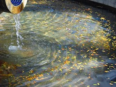 Autumn Leaves in Fountain (Jessie T*) Tags: autumnleaves flickrfriday autumn leaves fountain water ripples light
