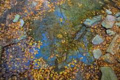 Nature's Paintbrush (glenda.suebee) Tags: reflection autumn ohio glendaborchelt fall colorful maple leaves sketch explore