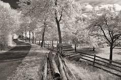 Wood (Jens J. Hoffmann) Tags: bw blackwhitephotos nikon d90 indfrarot infrared landscape mood nature sw tree einfarbig outdoor landschaft wald pflanze baum