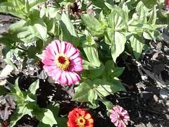 DSC_0014 (Jozef rulof) Tags: roluf jozef jose flor vermelho redgente familia caminhos passeio espiritual jozefrulof