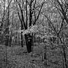 Clair-obscure/Chiaroscuro (bob august) Tags: 2016 aperture3 arbres arrondissementahuntsic automne autumn bw blackwhite canada d90 fall feuilles leafs manualmode modemanuel montreìal nikkor18300mm nikon nikond90 noiretblanc octobre slowphotography squareformat trees formatcarré 2016©rpd'aoust montréal blackandwhite