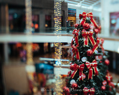 Xmas (Carmen Moreno Photography) Tags: lensbaby xmas christmas costarica titlshift