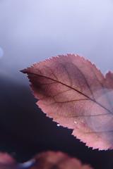 Autumn Silver