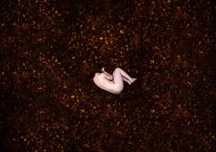 Vulnerability (Jessica-H-Ingram) Tags: jessicahingram jessica h ingram photography photoshop vsco nature vulnerable mental health autumn gold red orange yellow naked selfportrait self portrait healing heal