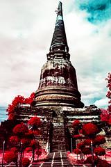 Wat Yai Chai Mongkhon, Ayutthaya, Thailand (Blurmageddon) Tags: film analogphotography kodak aerochrome colorinfrared 35mm fpp infrachrome thailand ayutthaya temple watyaichaimongkhon minoltasrtmc travel pakonf135 nexlab xpro c41 crossprocessed