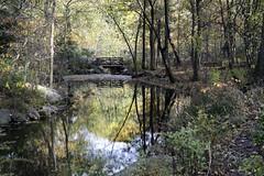 Ravine I (Joe Josephs: 2,861,655 views - thank you) Tags: autumn centralpark cityparks fall fallcolor fallfoliage joejosephsphotography nyc newyork newyorkcity travel travelphotography urbanparks landscape landscapephotography outdoorphotography parks landscapes