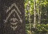 The eye of the forest (ur.bes) Tags: canon eos 600d 600 parc coaticook tree arbre foret forest foresta lumina sign signe symbole symbol oeil eye