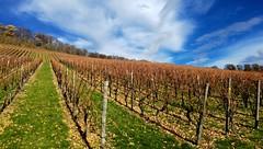 Wunnenstein (EdgarJa) Tags: deutschland baden wrttemberg wunnenstein weinberg wineyard viedo vignoble