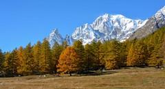 Autunno al Monte Bianco (giorgiorodano46) Tags: 2016 october ottobre2016 giorgiorodano nikon montebianco montblanc 4000 4000m autunno autumn automne herbst