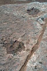 Saurierspuren bei Tuba City (astroaxel) Tags: usa arizona saurier dinosaurier spur tuba city