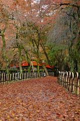 DSC02810 (MrSUIZOU) Tags: 京都 紅葉 北野天満宮 平野神社 十月桜