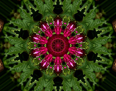 Dahlia Christmas Ornament (KISS - Keeping It Simple & Sweet) Tags: dahlia hss kaleidoscope surreal