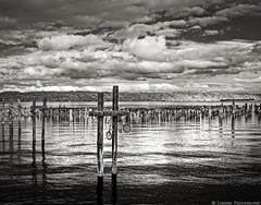 Port Remains (mjardeen) Tags: canon35mm28fd canon 35mm 28 fd tacoma washington sony a7ii a7m2 fall bw black white blackandwhite tones ir infrared 720nm converted lifepixel ruston waterfront rustonway art pilings bike bicycle commencement bay water salt pugetsound port ocean reflections light on1effects on1 texture landscape outdoors