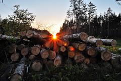 spring series (woods) (enzzo_) Tags: wood sunset sky sun tree sunshine forest woods nikon ukraine nikkor epic vadim springtime beldy nikon1 nikkor10mmf28 nikonone flickrestrellas nikonflickraward saariysqualitypictures bestcapturesaoi theacademytreealley nikon1v1 vadimbeldy