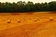 Color (Emocions Photo) Tags: naturaleza color canon arbol prado paja calor hierba líneas greenscene innamoramento fleursetpaysages