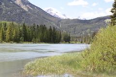 Walking Along the Bow River (CAYphotos) Tags: banff bowriver albertacanada banffnationalpark snowymountains canadianrockies