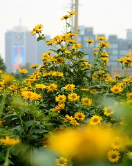 Beijing - Flowers & Towers (cnmark) Tags: china morning flowers mist buildings river smog district towers beijing   he chaoyang liangma  allrightsreserved