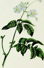 Anglų lietuvių žodynas. Žodis genus wintera reiškia genties wintera lietuviškai.