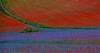 "... ma sono mille papaveri rossi. ("" paolo ammannati "") Tags: italy panorama mountain me italia photographer estate top natura io poppies fiori colori montagna umbria papaveri castelluccio fioritura paoloammannati effettinaturali fiorituraacastelluccio"