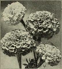 Anglų lietuvių žodynas. Žodis luffa acutangula reiškia <li>luffa acutangula</li> lietuviškai.