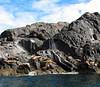 Alaska Salmon Fishing Lodge - Ketchikan 28
