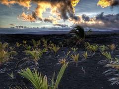 (Archer's Eye) Tags: love home hawaii bigisland archerseye archerkelly uploaded:by=flickrmobile flickriosapp:filter=nofilter