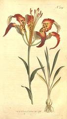 Anglų lietuvių žodynas. Žodis lilium catesbaei reiškia <li>lilium catesbaei</li> lietuviškai.
