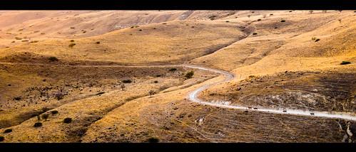 cow roads