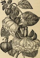 Anglų lietuvių žodynas. Žodis china fleece vine reiškia kinija vilnos vynuogių lietuviškai.