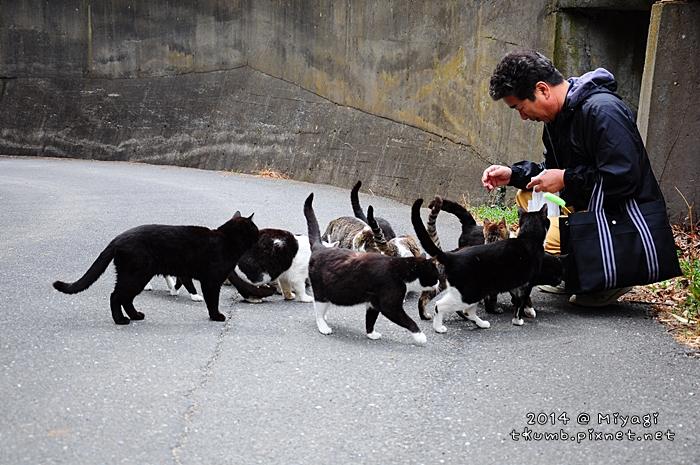 2014田代島16.jpg