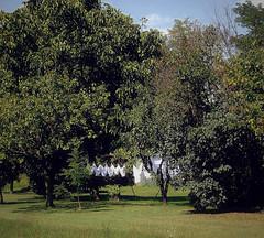 Mutande al sole (Aellevì) Tags: sky alberi estate pants knickers cielo sole prato bianco bucato pannistesi panni clotheshanging lavabiancheria aellevì adrianalv