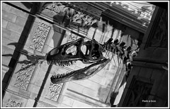 Dinosaur (Maw*Maw) Tags: museum dark mono dinosaur highiso photshop cs6