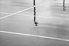 wet parking lots and mirrored lamps (loop_oh) Tags: reflection wet lamp lines germany deutschland mirror lampe hessen frankfurt stripes main stripe bank line mirrored lamps parkplatz reflexion frankfurtammain frankfurtmain roemer metropole römer parkinglots lampen hesse parkingdeck nass mainhattan parkdeck linien eintracht frankfurtam