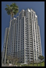 Land where the Palm Trees Grow Most Exceedingly Tall (Light Vessel) Tags: trees urban palms palm palmtrees tropical