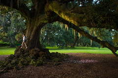 Tree of Life (dogslobber) Tags: life park new light sun sunlight tree golden oak orleans louisiana live warmth hour audubon