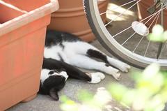 2014815 (Tokutomi Masaki) Tags: animal japan cat tokyo walk     2014