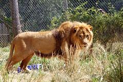 2012-06-26 RescueOne (40)- Roman