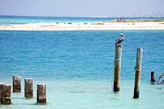 En attendant l ouverture (franoise morio) Tags: ocean sea mer pelican keywest floride