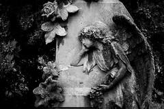 Fallen Angel (drugodragodiego) Tags: blackandwhite bw italy cemetery angel pentax angelo lombardia biancoenero k3 bagolino vallesabbia provinciadibrescia pentaxda1650mm smcpentaxda1650mmf28edalifsdm valledelcaffaro pentaxiani cimiterovecchio pentaxk3