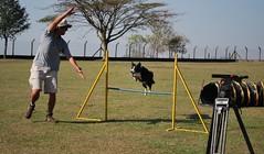 DSC_0100 (Clube de Cãompo Hotel Fazenda para Cães) Tags: votorantim estimacão hotelfazendaparacães clubedecãompohotelfazendaparacães