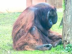 Image39 - Copia (Daniel.N.Jr) Tags: animal selvagem zoologico kodakz990