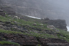 "Bighorn Sheep • <a style=""font-size:0.8em;"" href=""http://www.flickr.com/photos/63501323@N07/15045891881/"" target=""_blank"">View on Flickr</a>"
