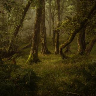 Woodland Wanders