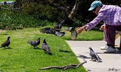 First Come First Serve (Dismal_Science) Tags: california street pentax pigeons streetphotography marinapark venturaca k30 da55300mm