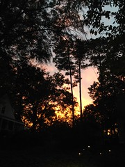 The splendor of a fall sunset. (MacGuffin56) Tags: sunset silhouette autumnal raleighnc gloaming