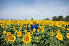 kansas (roscoepoet) Tags: lawrence ku sunflowers kansas dennis dennisabbot grinterfarms