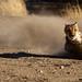 Cheeta Run_MGL0159 (30)-Edit