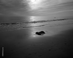 Shoreline at Lucy Vincent Beach (DKAIOG) Tags: 4x5 blackwhite chamonix045n2 coastline island landscape largeformat pyrocatmc tmax100 film monochrome