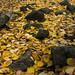 Löven fyller ut emellan stenarna