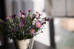 2016-11-01_11-08-16 (Le.Nam.) Tags: canoneos1dsmarkiii pentaxsmc 50mmf14 pentax flowers manualfocus canon